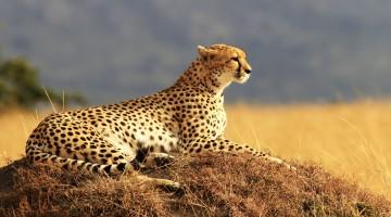 safari lowcost
